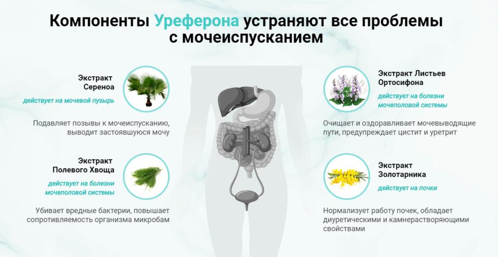 Состав препарата Уреферон